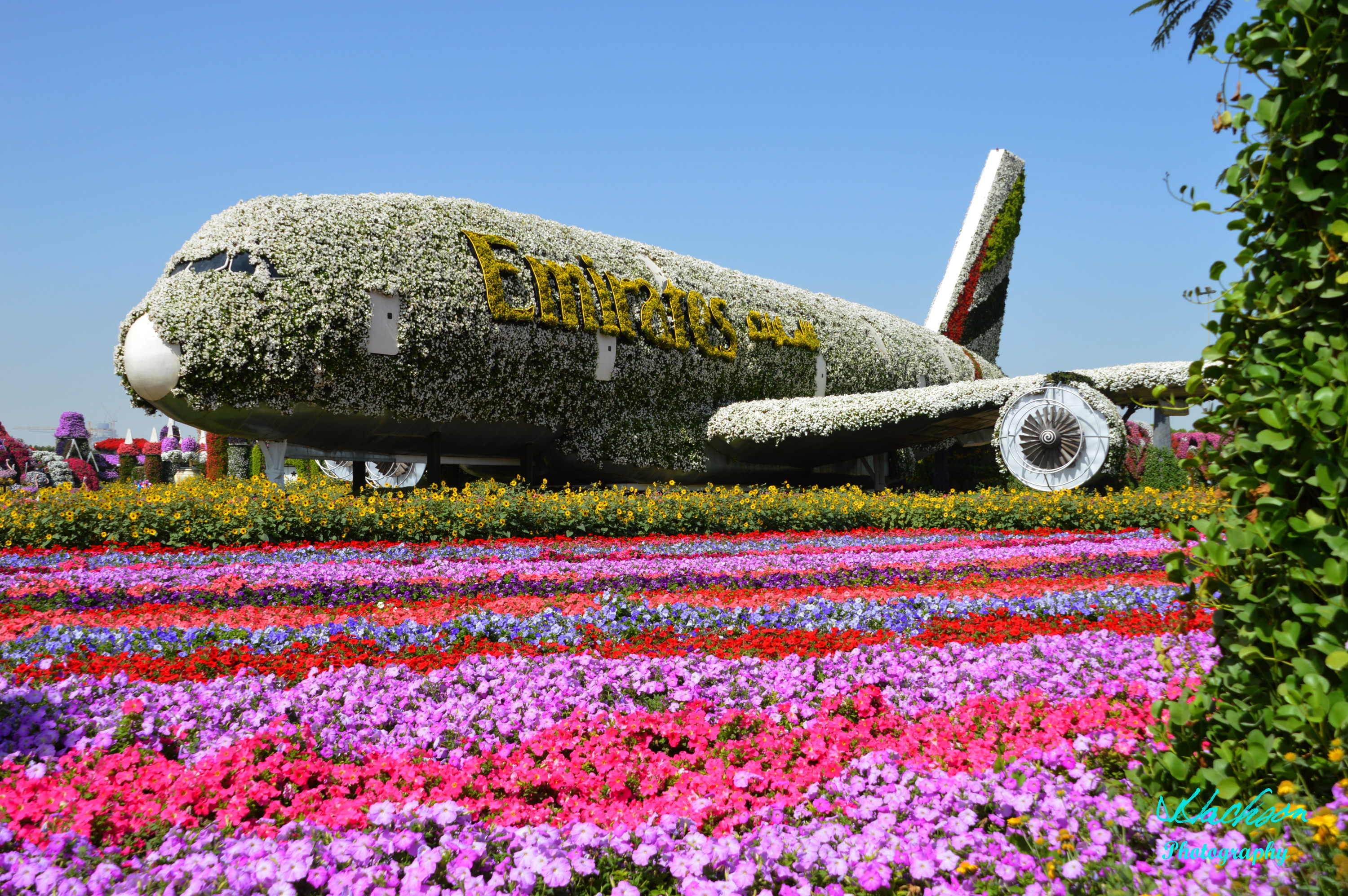 Photo of the Worlds largest floral jumbo jet